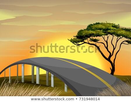 Ponte savana campo ilustração grama pôr do sol Foto stock © colematt