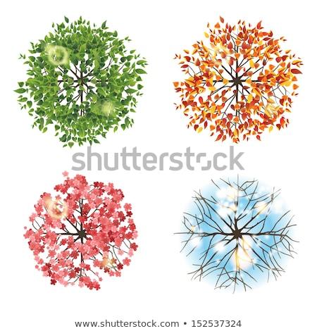 farklı · tür · bitkiler · yeşil · beyaz · yaprak - stok fotoğraf © colematt