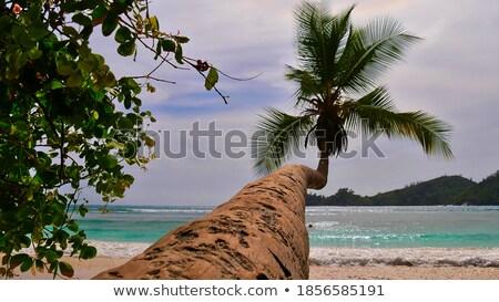 Pálmalevelek sziget Seychelle-szigetek közelkép fa víz Stock fotó © AndreyPopov