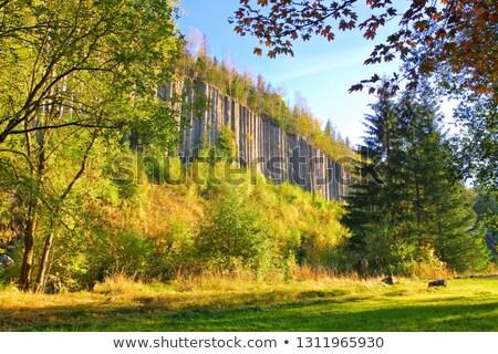 базальт колонки лес пейзаж горные осень Сток-фото © LianeM