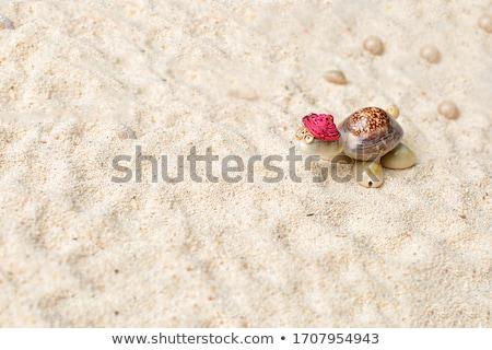 Zand vorm schildpad zomer strand Stockfoto © dolgachov