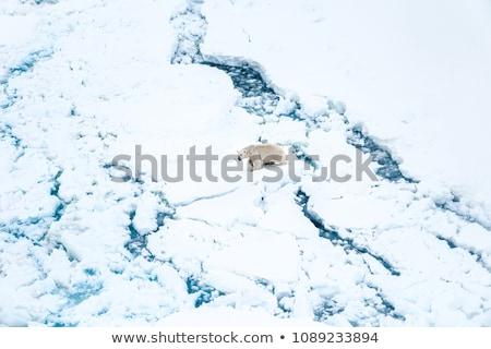Buzdağı buz buzul arktik doğa manzara Stok fotoğraf © Maridav