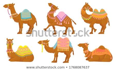 Bonitinho camelo desenho animado sorrir crianças projeto Foto stock © tigatelu
