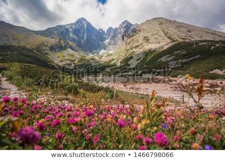 Alto Eslováquia montanhas parque paisagens Foto stock © phbcz