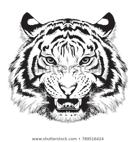 Tiger Head Graphic Mascot  Stock photo © chromaco