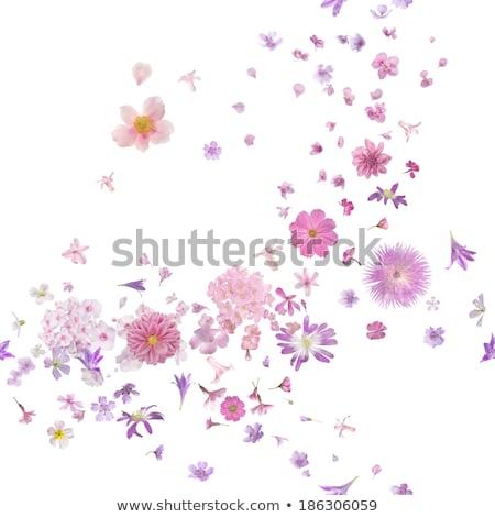fleurs · bleu · eau · extrême · macro - photo stock © elenaphoto