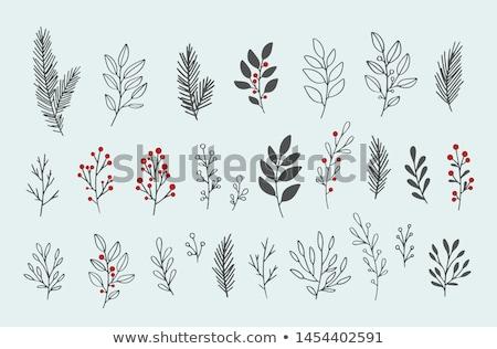 冬 · クリスマス · 絞首刑 · スプルース - ストックフォト © simply