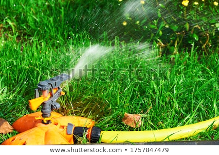irrigation spraying stock photo © stevemc