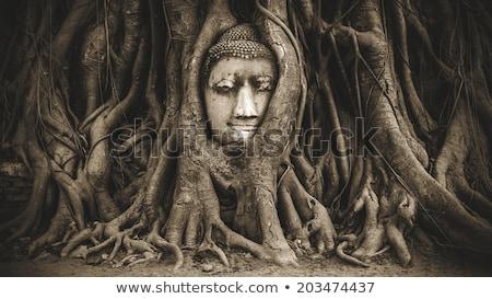 buddha heads in tree roots stock photo © joyr