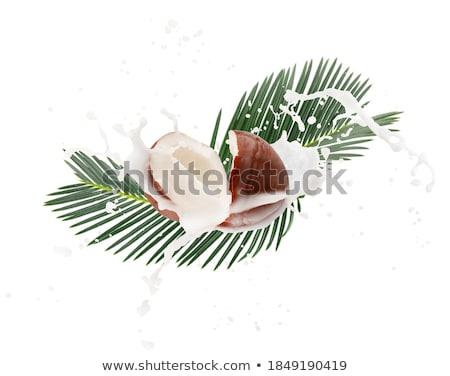 кокосового · кокосовое · молоко · всплеск · дерево · фон · пить - Сток-фото © redpixel
