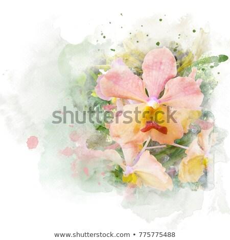 赤 · 花 · 画像 · 春 · 自然 · デザイン - ストックフォト © adamson