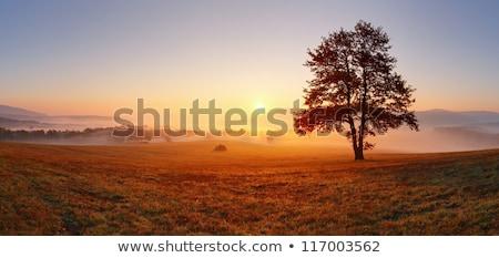 красивой осень пейзаж закат электрические Сток-фото © jaycriss