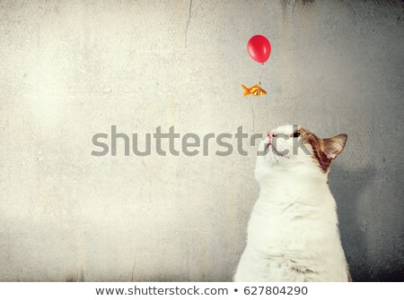 cat looking at goldfish stock photo © c-foto