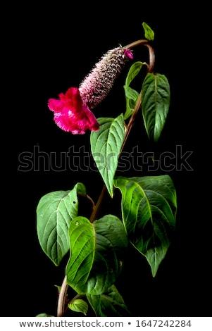 lã · flores · flor · vintage · jardim · de · flores · natureza - foto stock © sweetcrisis