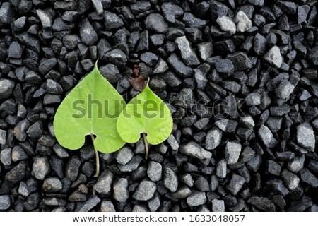 Two Perfectly heart-shaped leaves Stock photo © Smileus