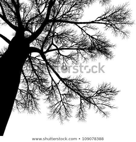 velho · árvore · tempestuoso · céu · noite · outono - foto stock © prill