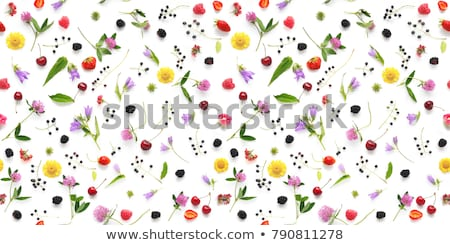 8 march seamless pattern from the flowers stock photo © popaukropa