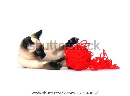 Siamese Kittens on White Background With Yarn Stock photo © tobkatrina