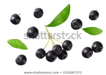 Ripe aronia berry fruit on the branch Stock photo © stevanovicigor