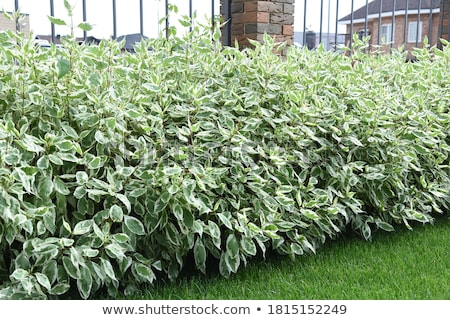 Fences and plants Stock photo © bluering