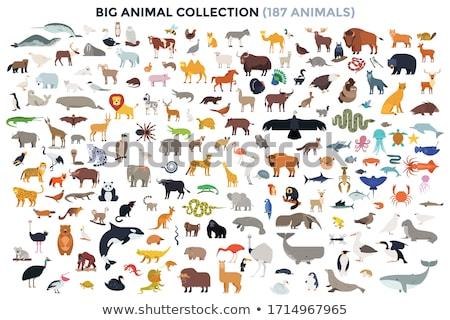 Vadállatok gyűjtemény különböző sziluettek sziluett név Stock fotó © macropixel
