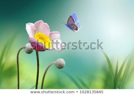 Ogród świeże kwiaty Motyl ilustracja trawy Zdjęcia stock © bluering
