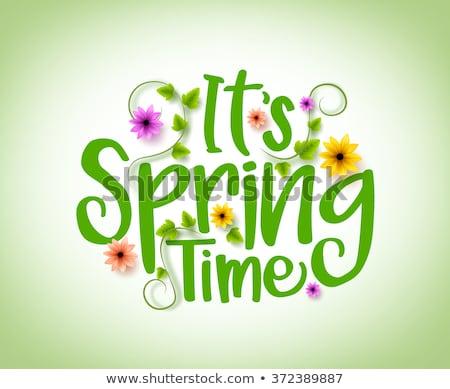 tavasz · nyár · évszakok · poszter · illusztráció · szezonális - stock fotó © adamson