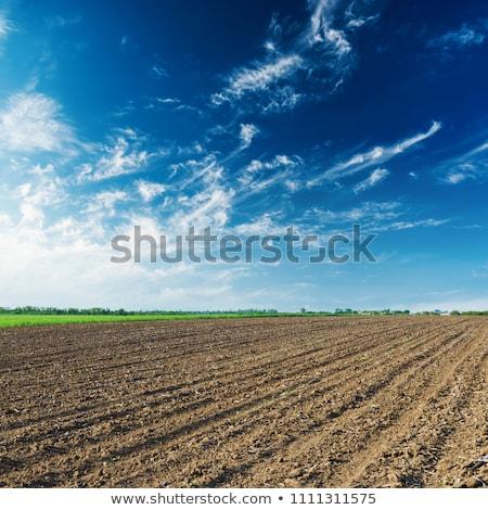 Textúra megművelt mező kék ég égbolt tájkép Stock fotó © inaquim