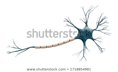 Myelination of nerve cell Stock photo © Tefi