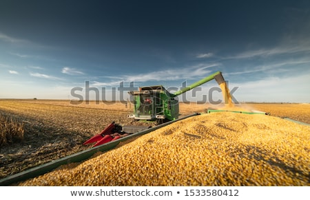 Corn maize harvest, combine harvester unloading grains Stock photo © stevanovicigor