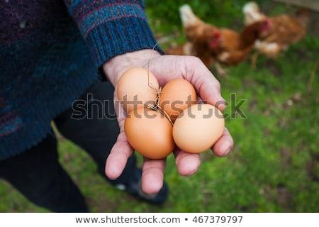 Kéz tart barna szabad terjedelem tojás Stock fotó © IS2
