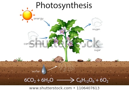 Stock photo: Photosynthesis explanation science diagram