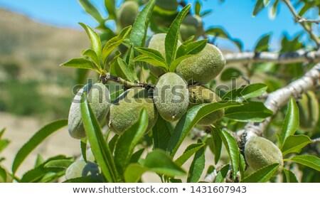 Diók mandula közelkép kilátás egészséges vegan Stock fotó © artjazz