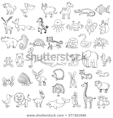 Doodle animal character for jellyfish Stock photo © colematt