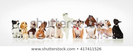 Curioso preto e branco para cima em pé branco Foto stock © feedough