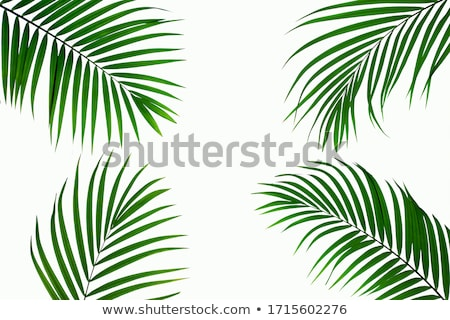 palmboom · blauwe · hemel · witte · wolken · vakantie · natuur - stockfoto © anna_om