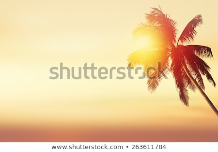 palm trees over sun at venice beach, california Stock photo © dolgachov