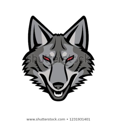 Gray Coyote Head Mascot Stock photo © patrimonio