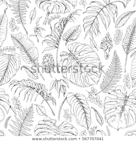 Tropical Exotic Bush Leaves Hand Drawn Vector Stock photo © pikepicture