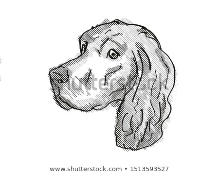 Stockfoto: Gordon Setter Dog Breed Cartoon Retro Drawing