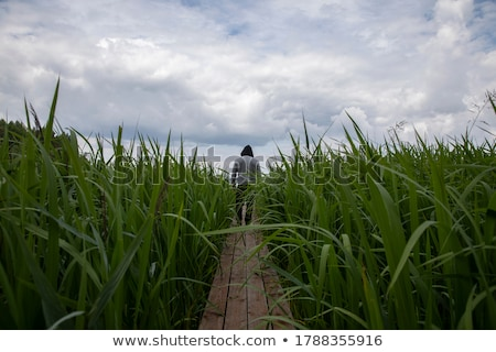Man surrounded by tall grass Stock photo © photography33