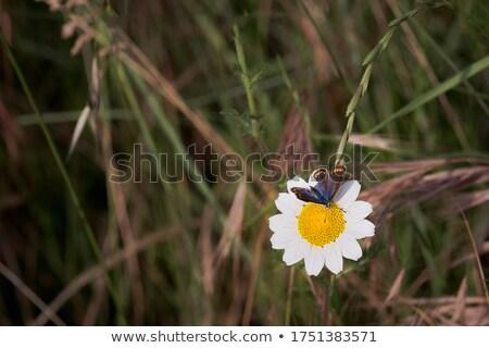 wenig · Schmetterling · farbenreich · orange · Tier - stock foto © prill