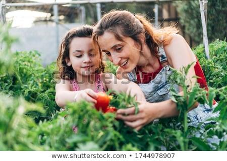 jardinage · été · femme · herbes · heureux · différent - photo stock © photography33