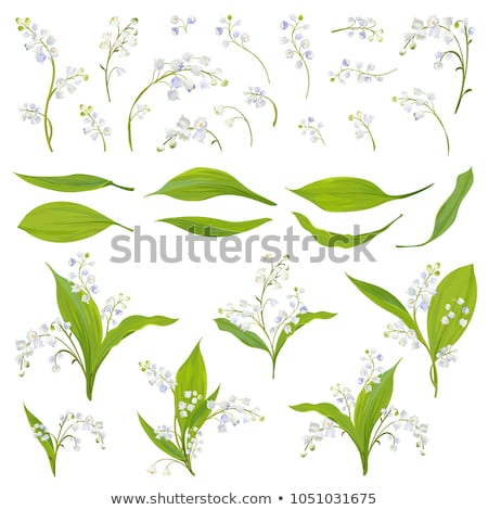 Stock photo: lilies of the valley