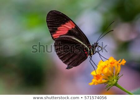 Kicsi postás pillangó makró lövés levél Stock fotó © macropixel