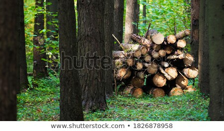 Panoramic view of logs stacked Stock photo © broker