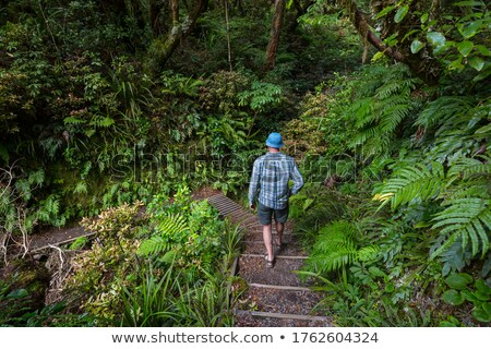 man hiking in the forest stock photo © photography33