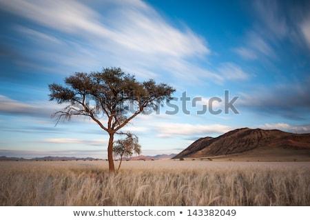 Szafari dzsip afrikai tájkép felhők naplemente Stock fotó © adrenalina
