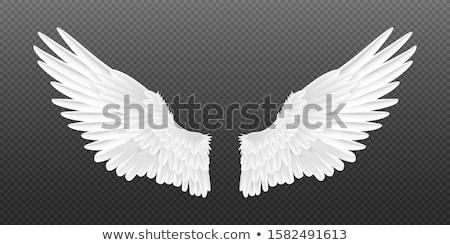 hermosa · rojo · halcón · fondo · aves - foto stock © tiero