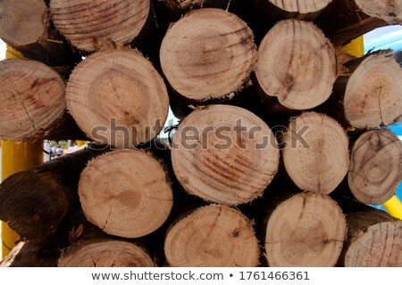 Cut Wooden Logs Stacked in Forest for Pulp or Energy Stock photo © tainasohlman